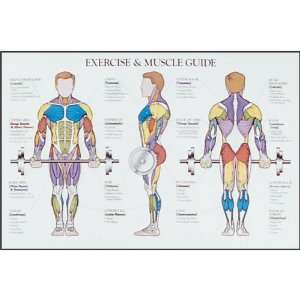 Exercise & Muscle Chart:  Sports & Outdoors