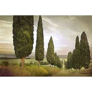 Jimmy Williams: 36W by 24H : Cypress Road, Siena CANVAS