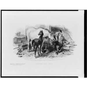 Bank note illustration,bucolic scene,horse,man 1856