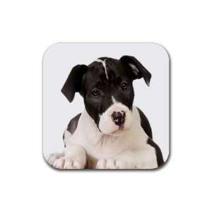 American Staffordshire Puppy Dog Rubber Coaster (4 pack) DD0015