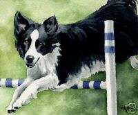 BORDER COLLIE Painting Dog ART 11 X 14 LARGE Signed DJR