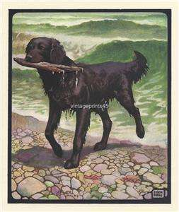 Flat Coat Retriever Edwin Noble colour dog print 1910
