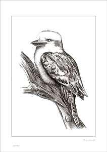 KOOKABURRA BIRD RUSTIC SHABBY STYLE CHIC DRAWING