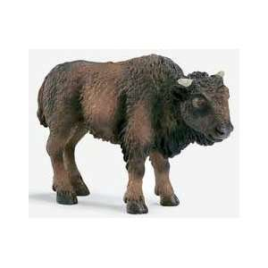 American Bison Calf: Everything Else