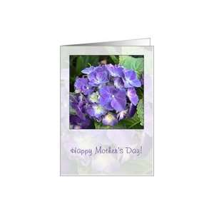 Happy Mothers Day   blue hydrangea Card Health & Personal