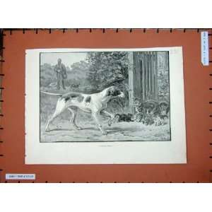 1889 Dadd Fine Art Hunting Man Hound Dog Kitten Cats  Home